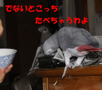 5_朝食4