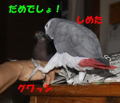 6_朝食5
