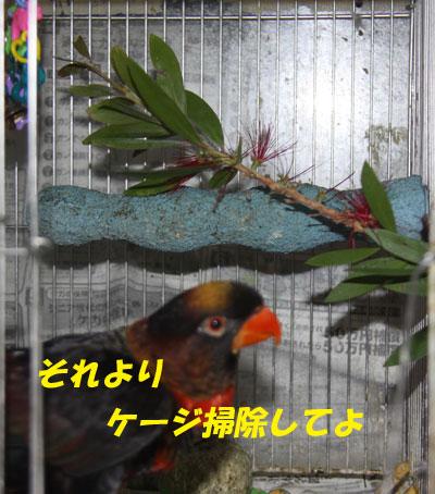 9_ピンナ