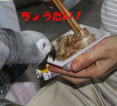 1_カンナ1