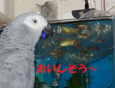 5_熱帯魚