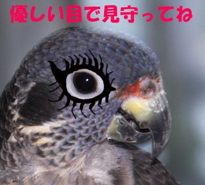 8_優しい目