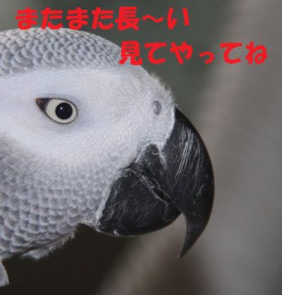 9_長い目