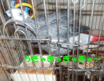 7_lanna3.jpg
