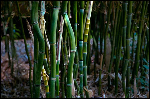 bamboo04-blog.jpg