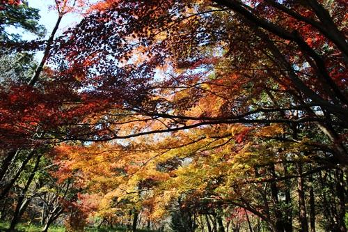 IMG_6680嵐山