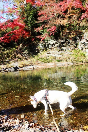 IMG_6734嵐山