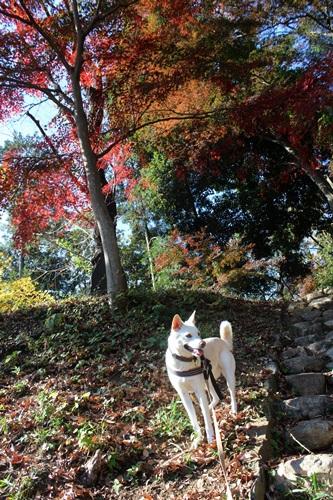 IMG_6650嵐山