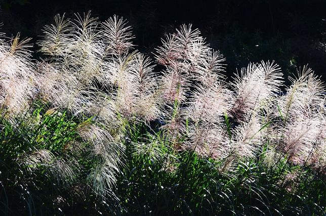 山茶花が咲くころ(2)