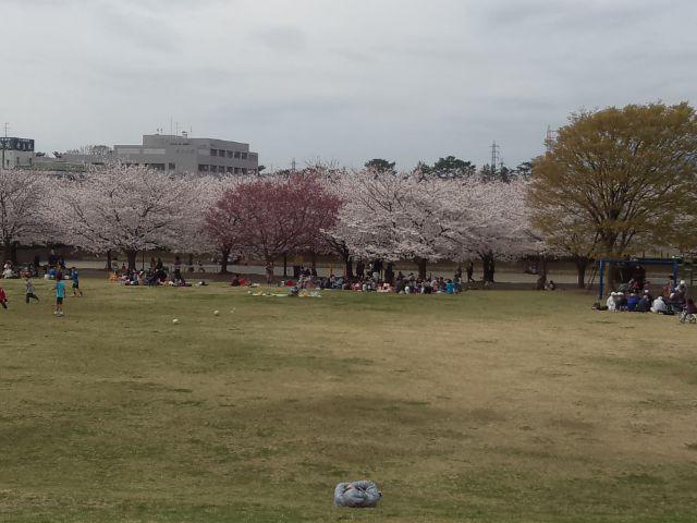 DSC_0776桜