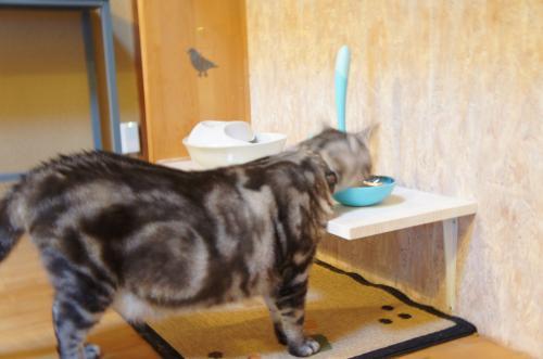 猫の食卓巨大猫