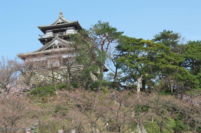 13-3-25-1丸岡城桜祭
