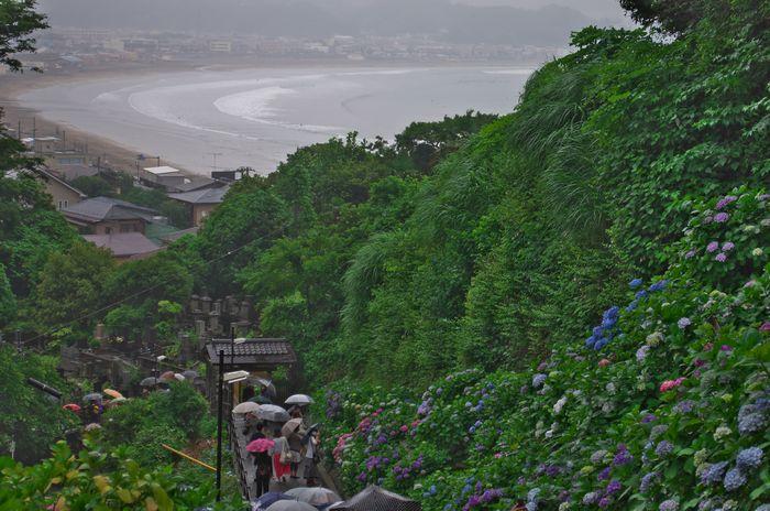 13-6-11-1成就院から見るあじさいと湘南の海