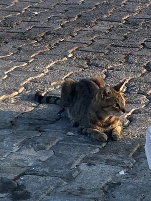 黒茶猫さま