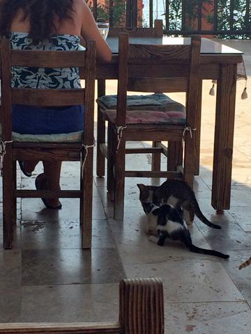 お姉さんと猫