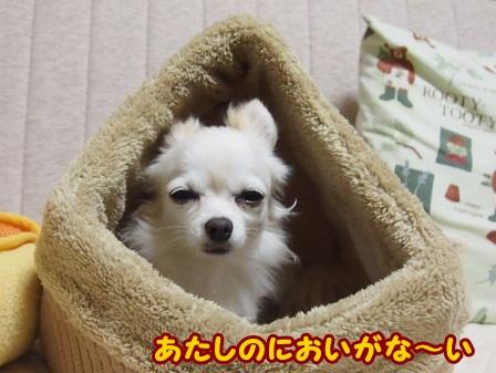blog4626a.jpg