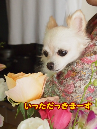 blog4685a.jpg