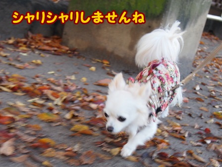 blog4782a.jpg