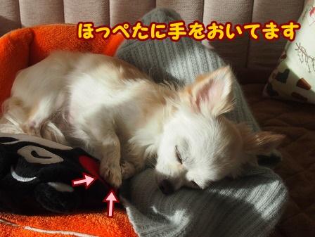 blog4800a.jpg