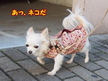 blog4846a.jpg