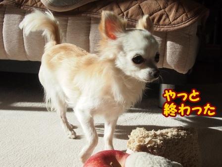blog4859a.jpg
