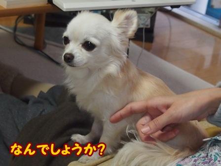 blog4880a.jpg