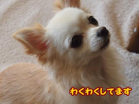 blog4959a.jpg