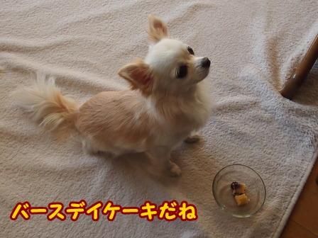 blog4960a.jpg