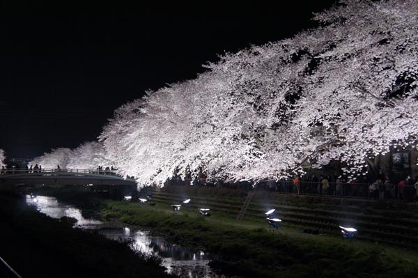 桜ひら~ひら~♪