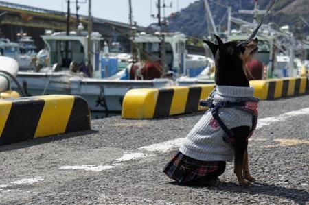 漁港とわんこ