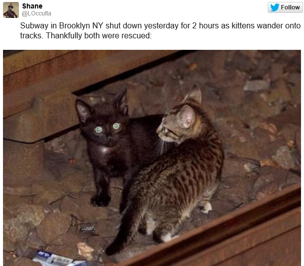 Subway in Brooklyn NY shut down yesterday for 2 hours as kittens wander onto tracks. Thankfully both were rescued