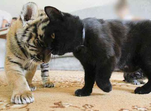 猫と頭をスリスリしあうところ -