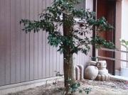 川越八幡宮1