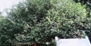 冠稲荷神社3