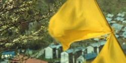 風になびく黄色いハンカチ