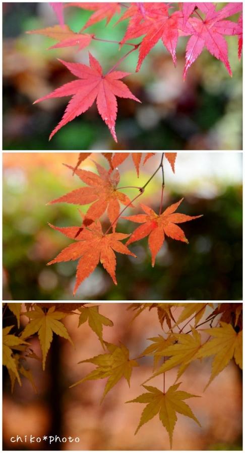 photo-385 秋色グラデーション