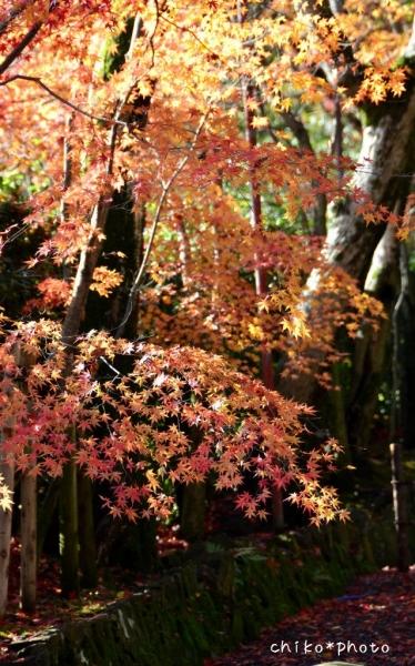 photo-387 秋色グラデーション3_2