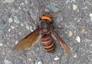 大野城 蜂駆除 蜂の巣