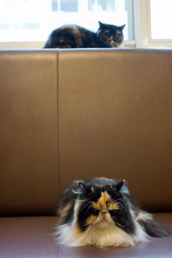 猫カフェ-3