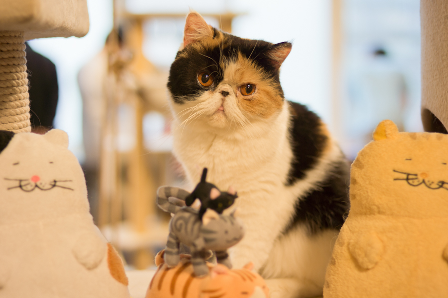 猫カフェ-4