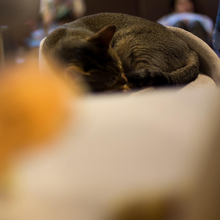 猫カフェ四角