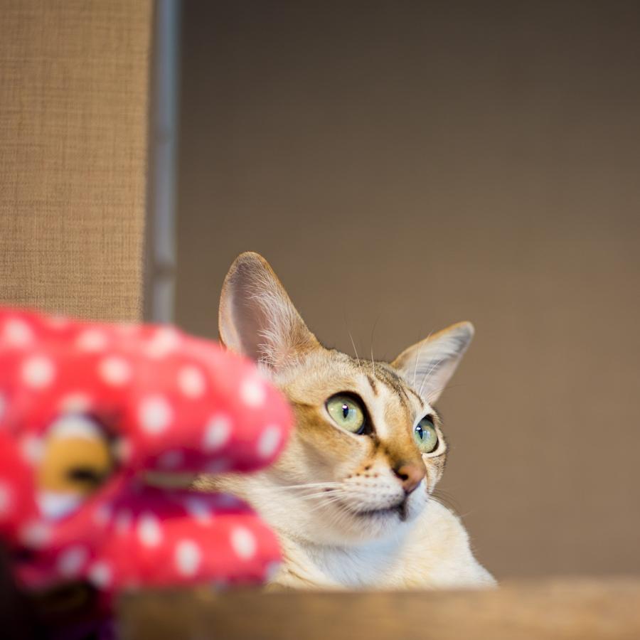 猫カフェ四角-2
