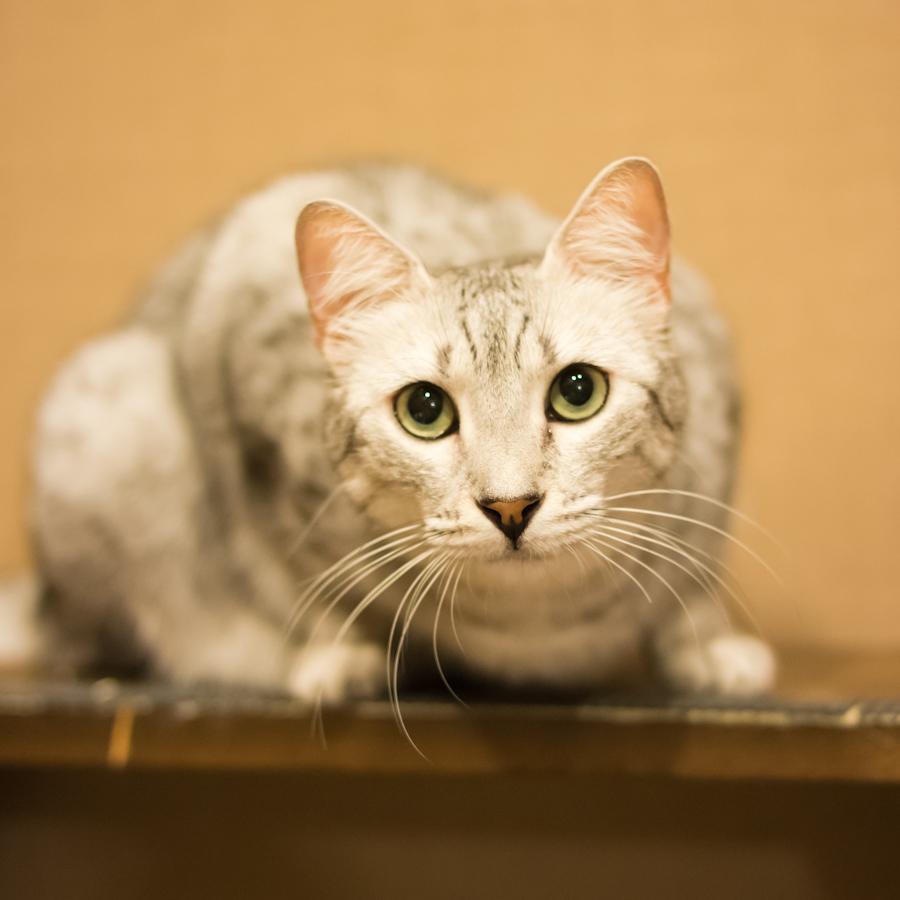 猫カフェ四角-3