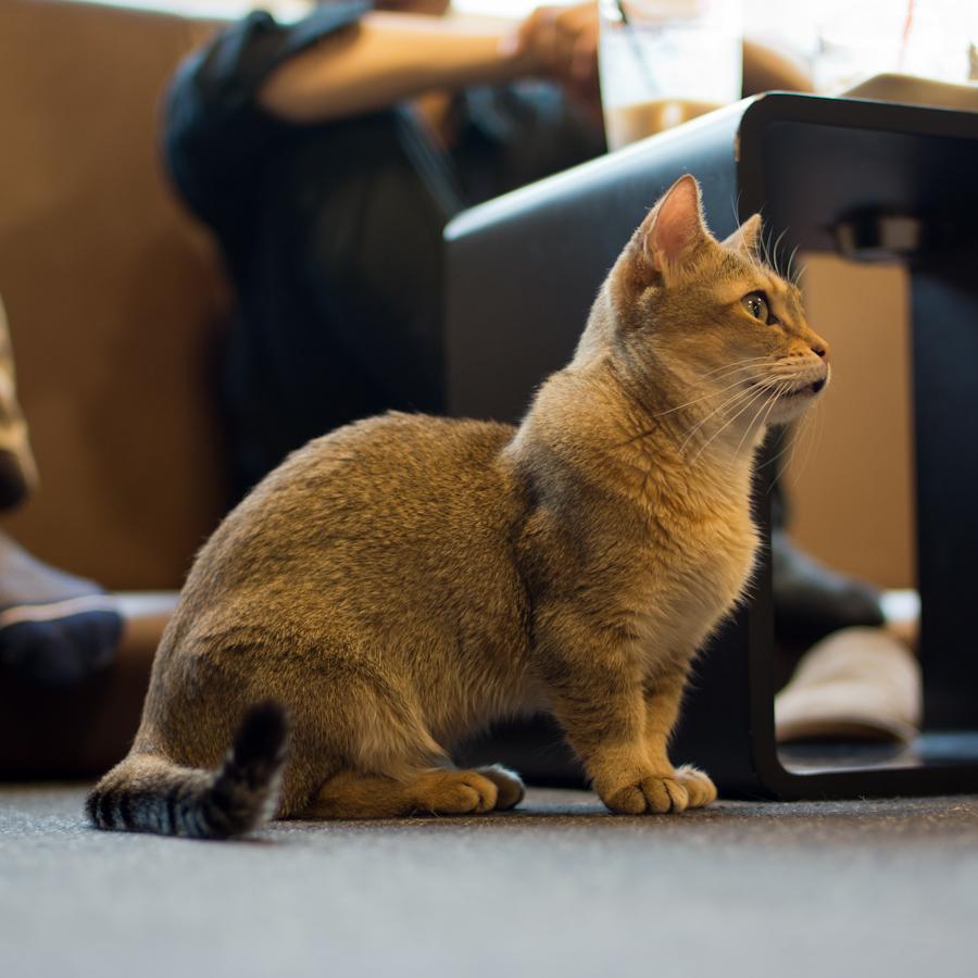 猫カフェ四角-4