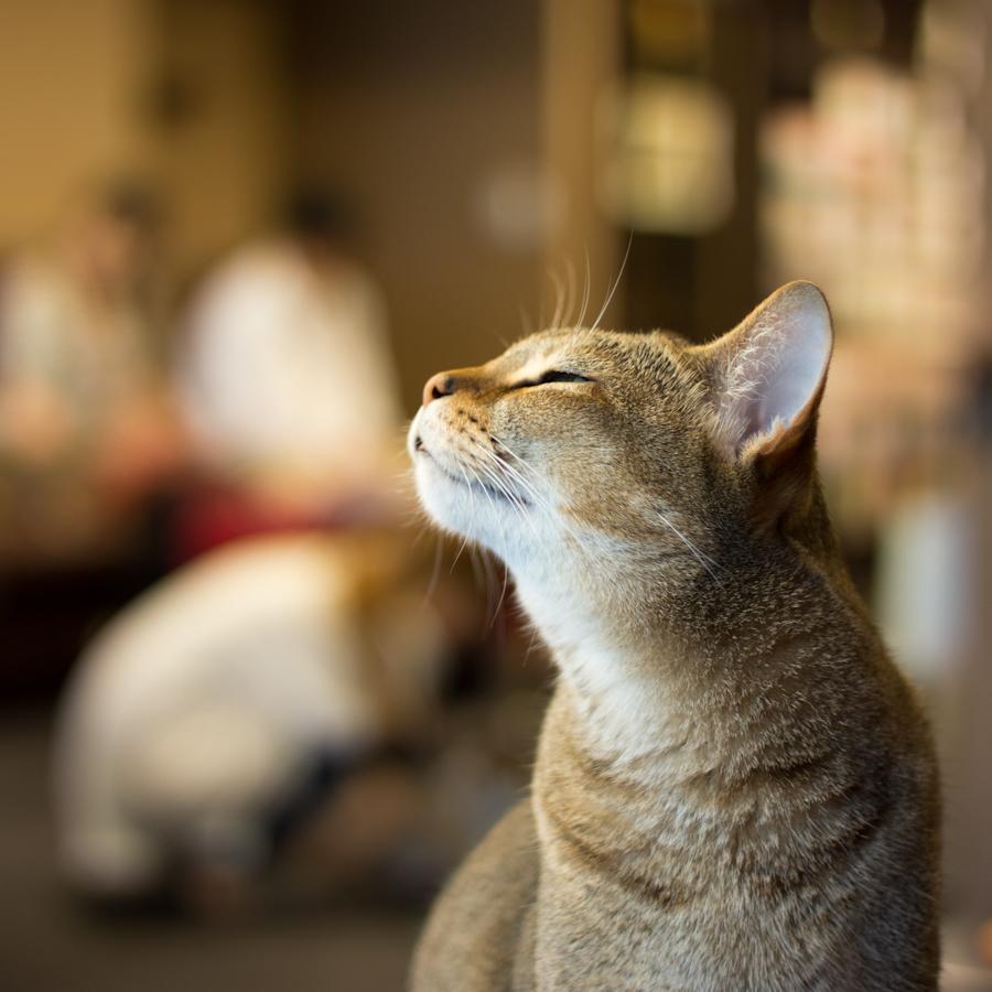 猫カフェ四角-5