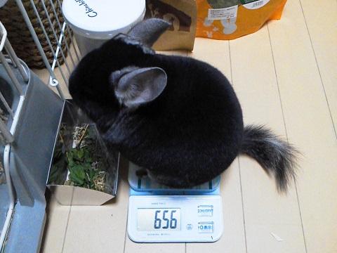 加奈ちゃん、体重測定20130525