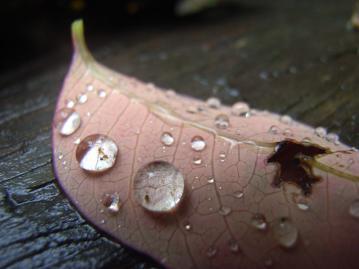 130528-13=落葉と雨滴