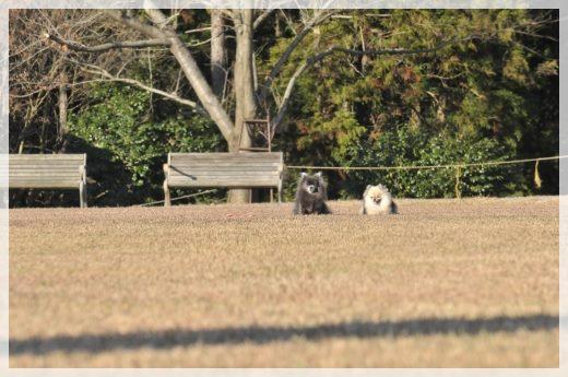 農業公園9 13-12