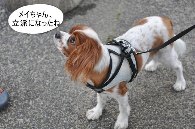 2013,07,14 浜坂花火大会 021