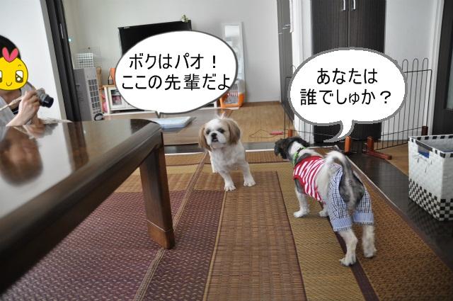 2013,07,17 パオちゃんいらっしゃ~い 006